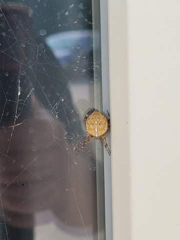 Was ist das für eine Spinne? Ist die gefährlich?
