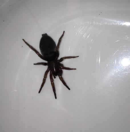 spinne1 - (Tiere, Spinne, Tierart)