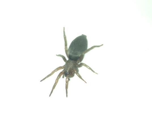 spinne2 - (Tiere, Spinne, Tierart)