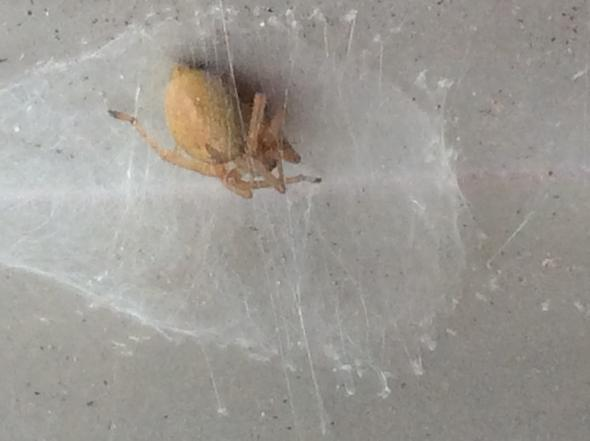 Bääääh - (Spinnen, Art)