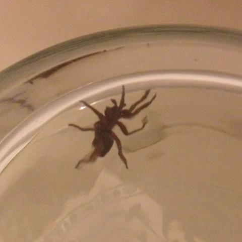 was ist das f r eine spinne leute die war im schlafzimmer tiere spinnen