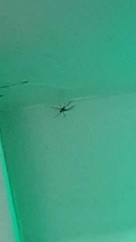 Was ist das für eine spinne und ist die schlimm?
