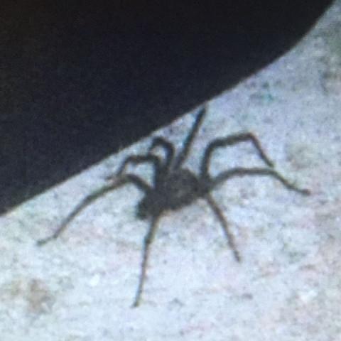 Dkdkdjdj - (Tiere, Spinnen)