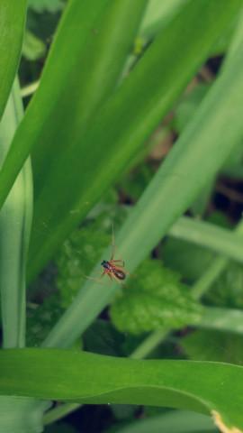 Unterseite - (Tiere, Biologie, Spinnen)