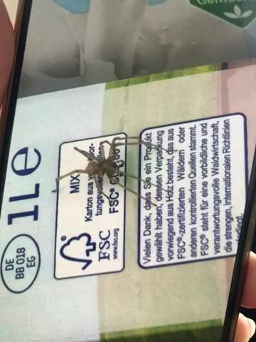 Was ist das für eine Spinnen art?