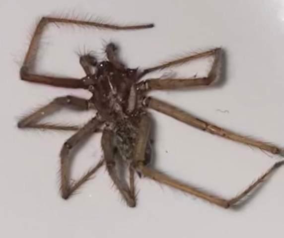 Was ist das für eine Spinnenart?