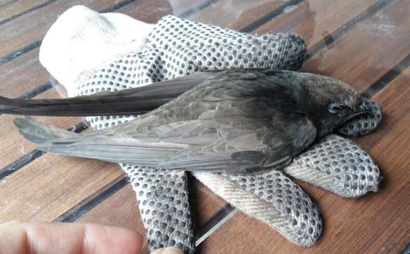 Vogel den meine Tochter entdeckt hat - (Vögel)