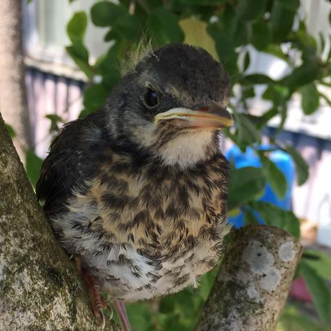 Vogel  - (Tiere, Biologie, Vögel)