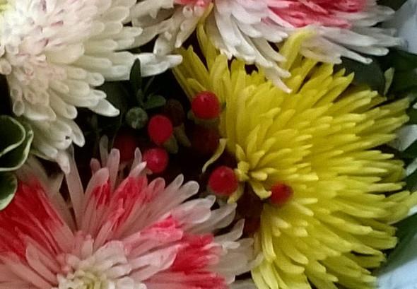 blume - (Pflanzen, Blumen)