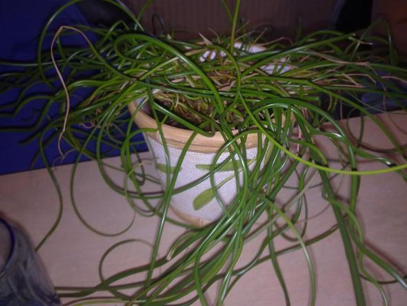 Bild 1 - (Pflanzen, Zimmerpflanzen, Pflege von pflanzen)