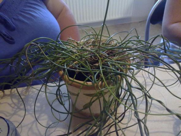 Bild 2 - (Pflanzen, Zimmerpflanzen, Pflege von pflanzen)