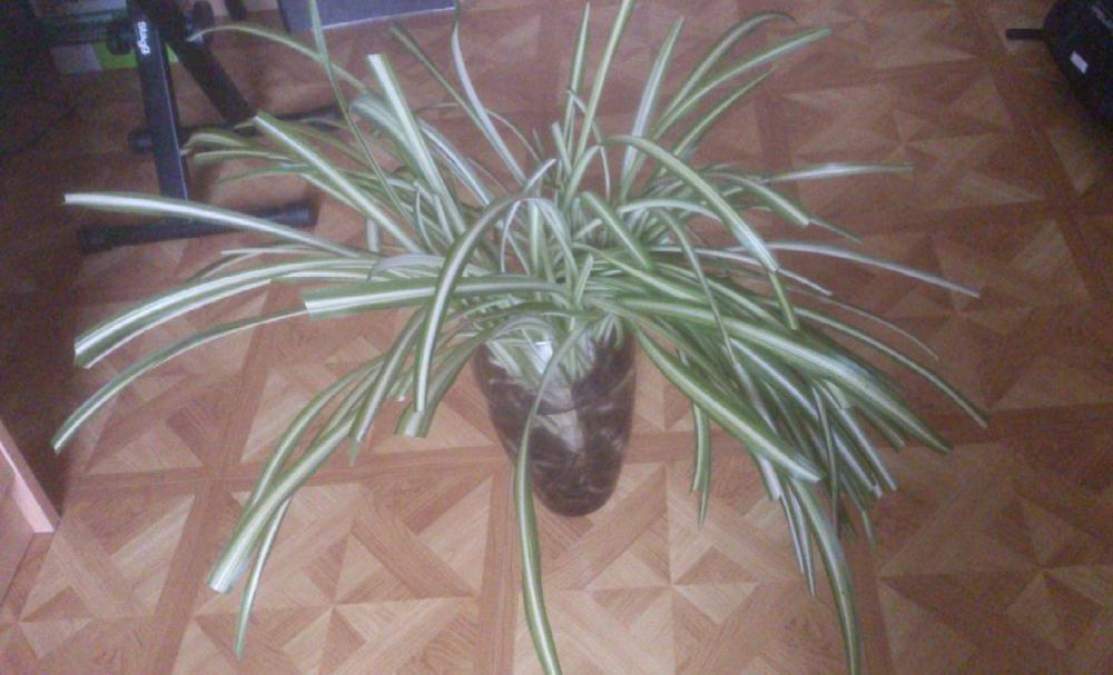 was ist das f r eine zimmerpflanze h ngepflanze garten pflege pflanzen. Black Bedroom Furniture Sets. Home Design Ideas