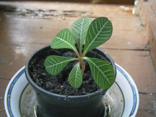 Was ist das für eine Zimmerpflanze (siehe Foto)?