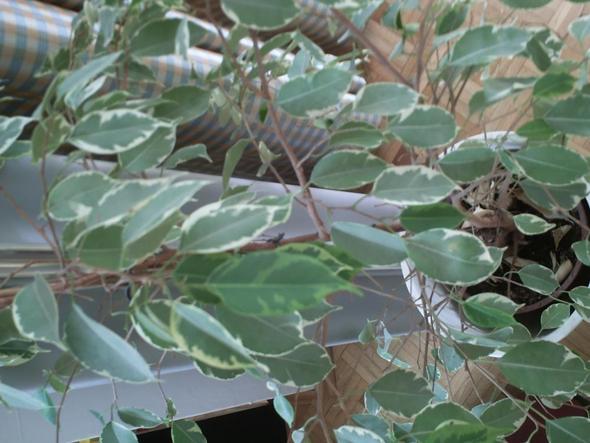 Die Zimmerpflanze - (Katzen, Pflanzen, Natur)