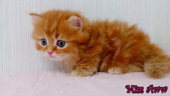 Katze - (kaufen, Katze)