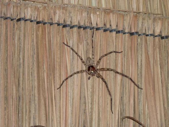 Was ist das für ne Spinne? und ist die giftig?