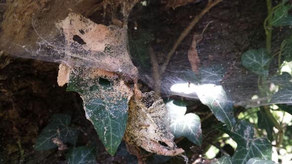Dieses Nest hab ich in einem Volkspark fotografiert - (Tiere, Nest)