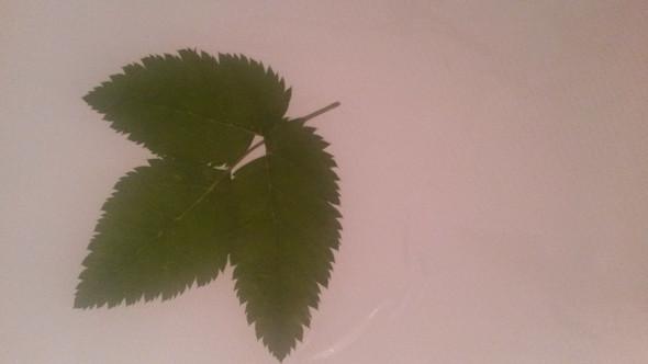 blatt - (Garten, Natur, Baum)
