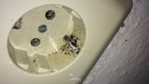 In der Steckdose  - (Tiere, Wand, Insektenbefall)