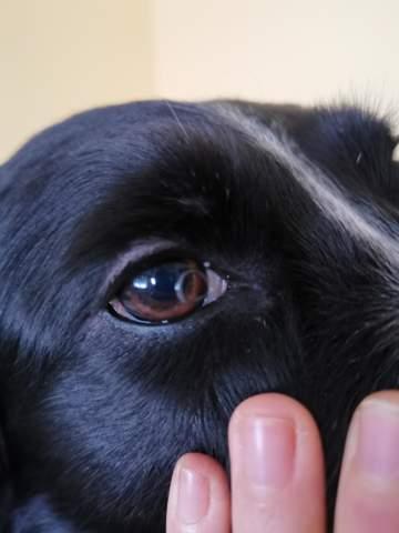 Was ist das im Auge von meinem Hund?