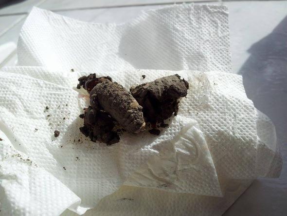 was ist das nest dreck beim putzen im fensterrahmen entdeckt fenster seltsam fugen. Black Bedroom Furniture Sets. Home Design Ideas