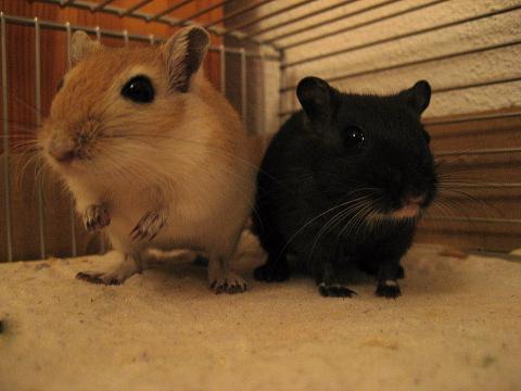 mine zwei renner (vor meinem Urlaub) - (Tiere, Gewicht, Maus)