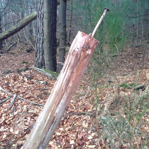 Bild 1 - (Natur, Baum, Wald)