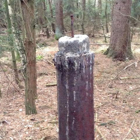Bild 2 - (Natur, Baum, Wald)