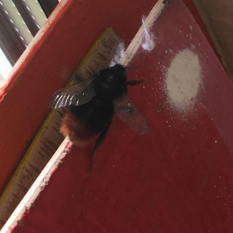 What the hell ist dat - (Insekten, Gefahr, Bienen)