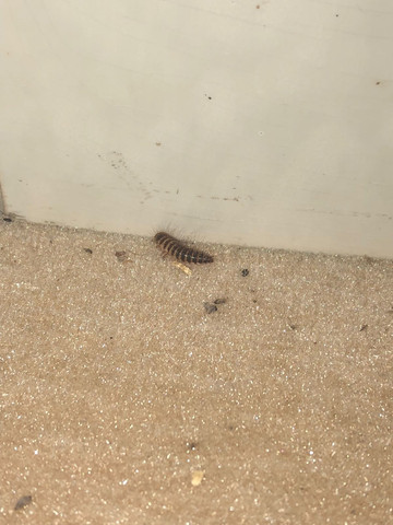 Das hier - (Insekten, Käfer, Schädlinge)