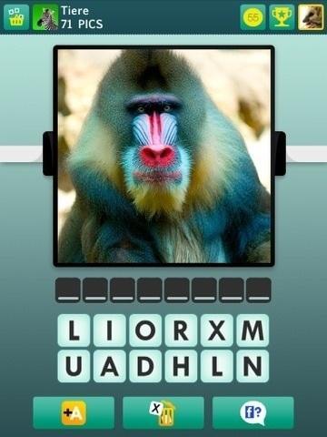 Affe oder Tier - (Tiere, Affen)