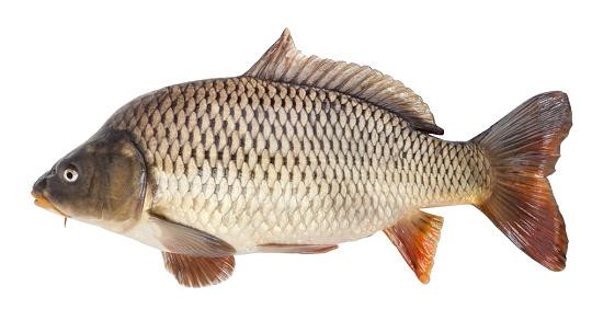 Fisch - (Tiere, Fische)