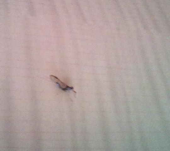 was ist dies f r ein insekt foto tiere biologie insekten. Black Bedroom Furniture Sets. Home Design Ideas