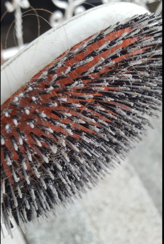 Was ist dieses Zeug in meiner Haarbürste?
