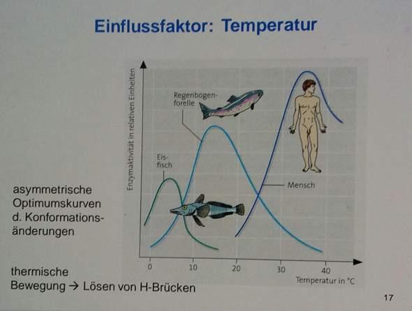 Was ist eine Konformationsänderung (Temperaturoptimum, Enzyme)?