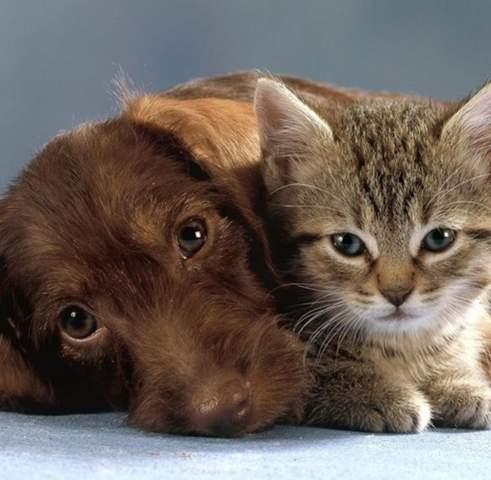 Was ist euch lieber als Haustier: Hund, Katze oder beide?