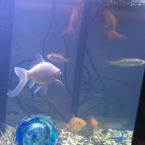 Meine Fische die ruhig sind  - (Fische)