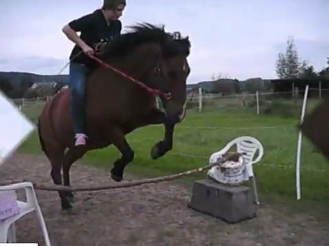 Die ersten sprungversuche ohne sattel & zaumzeug... - (Pferde, Pony, Pferderassen)