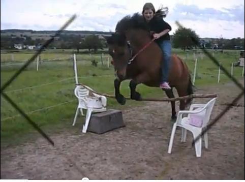 ... - (Pferde, Pony, Pferderassen)