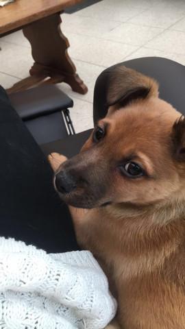 Unser kleiner Hachi - (Hund, Welpen)