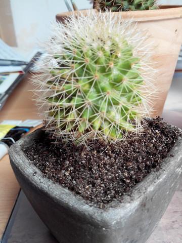 Was ist mit diesem Kaktus? und wie kann ich den retten?