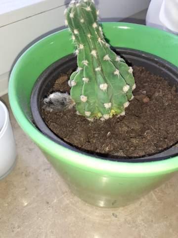 Was ist mit meinem Kaktus los?