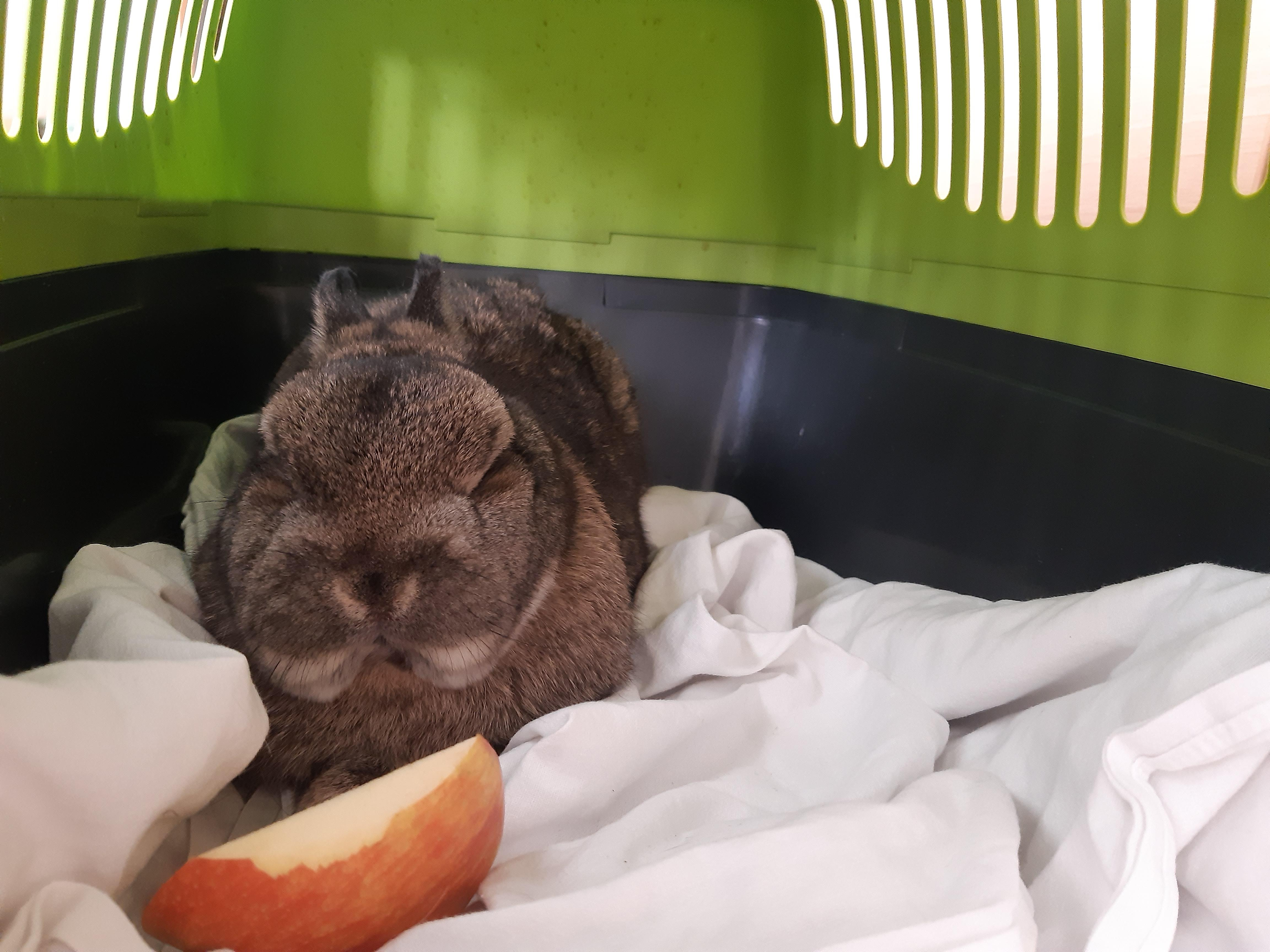 Kaninchen kennenlernen