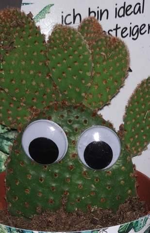 Was ist mit meinem (lieblings) Kaktus los?