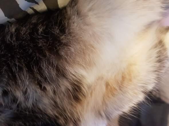 Was ist mit meiner Katze ihrem Fell?