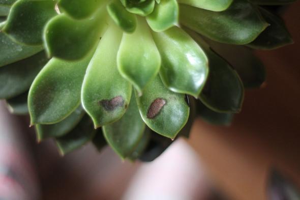 .. - (Pflanzen, Pflanzenpflege, Sukkulenten)