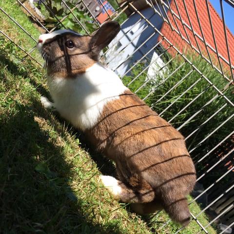 Mein Kaninchen Streusel - (Kaninchen, weiß, braun)