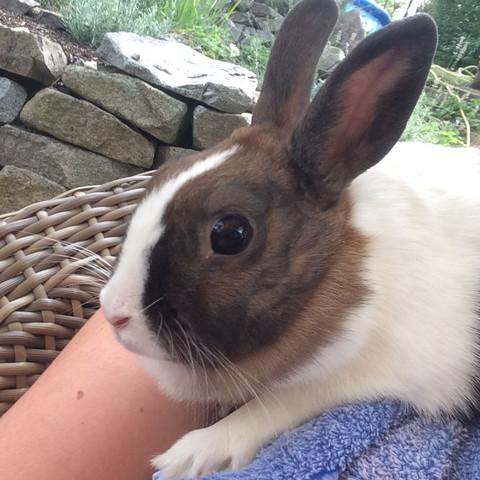 Mein Kaninchen - (Kaninchen, weiß, braun)