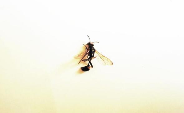 Was für ein Insekt ist das? - (Biologie, Insekten, Art)