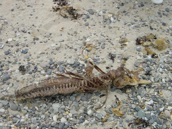 Skelett - (Tiere, Biologie, Zoologie)